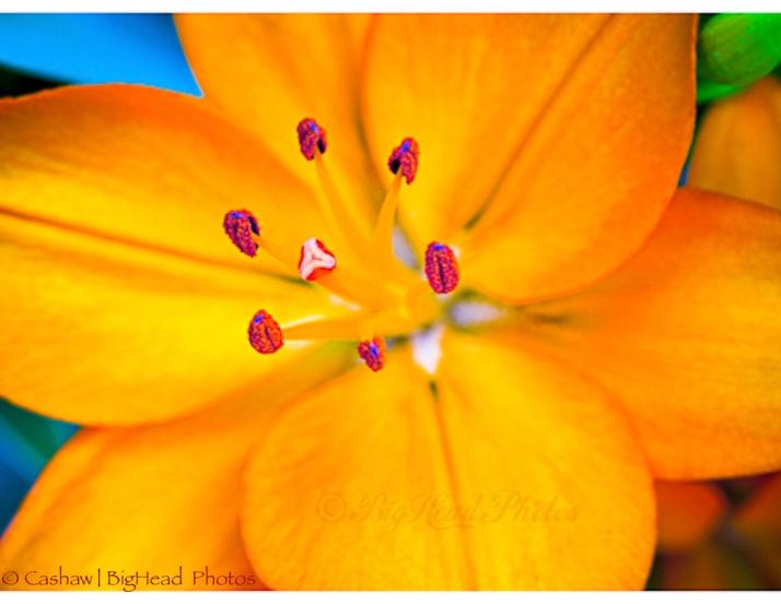 Orange Flower Watermarked