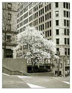 A tree blooms in the Burgh